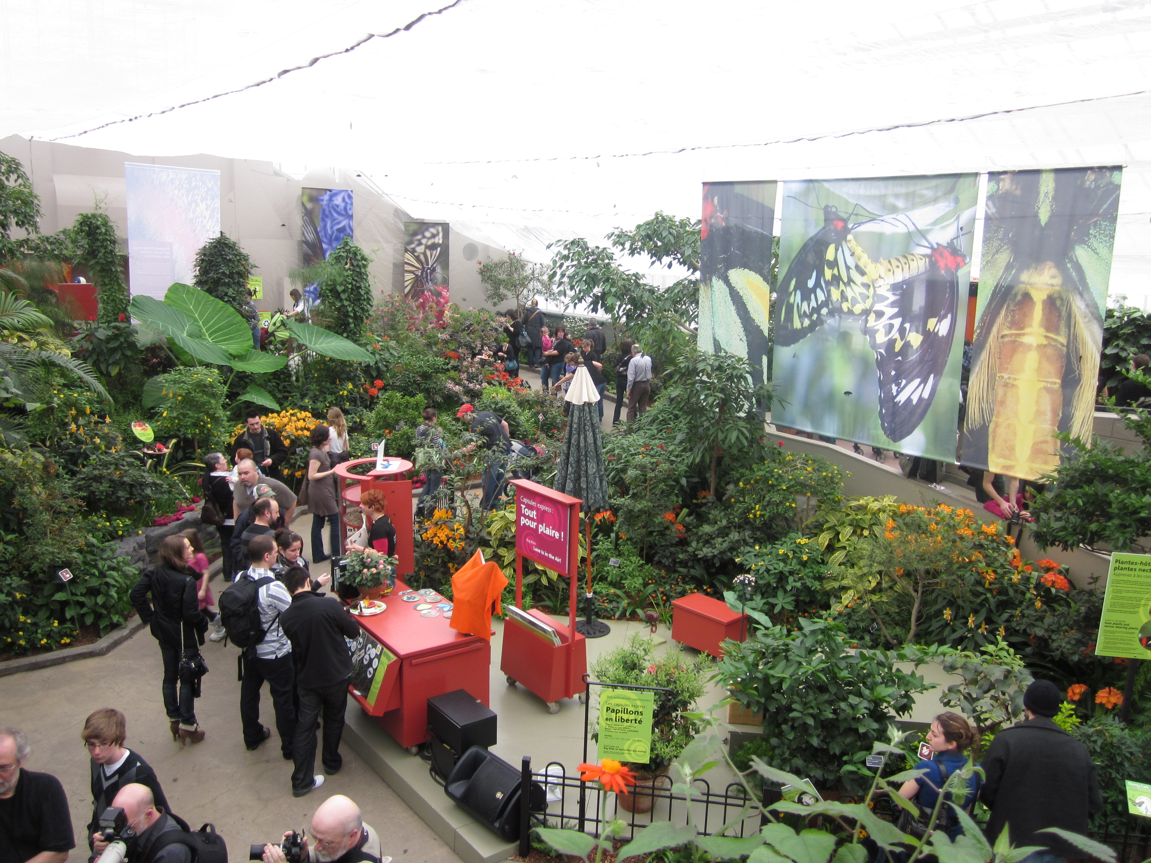 Ordinaire Butterflies Go Free Is An Annual Event At The Montreal Botanical Gardens.  Thousands Of Butterflies U2014 Almost All From Butterfly Farms In Costa Rica U2014  Are ...