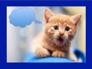Kitten Thought Bubble